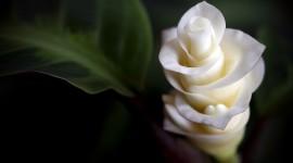4K Tropical Flowers Wallpaper Free