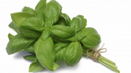 Basil Wallpaper Free