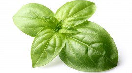 Basil Wallpaper Gallery
