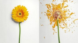 Broken Flowers Desktop Wallpaper HD