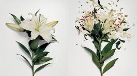 Broken Flowers Image Download
