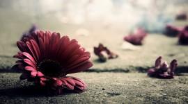 Broken Flowers Photo