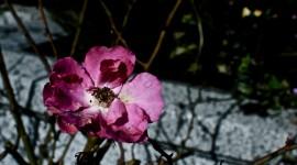 Broken Flowers Photo Download