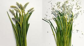 Broken Flowers Picture Download