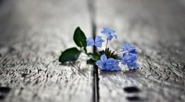 Broken Flowers Wallpaper Background