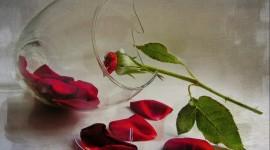 Broken Flowers Wallpaper Download