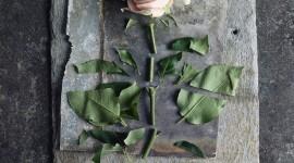 Broken Flowers Wallpaper For Mobile