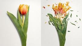 Broken Flowers Wallpaper For PC