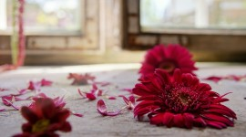 Broken Flowers Wallpaper HQ