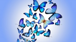 Butterflies Wall Picture Download