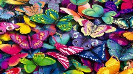 Butterflies Wall Wallpaper Download
