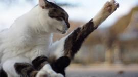 Cat's Foot Photo
