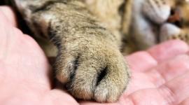 Cat's Foot Photo Download