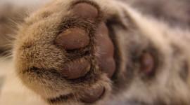Cat's Foot Wallpaper