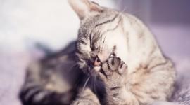 Cat's Foot Wallpaper Download