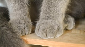 Cat's Foot Wallpaper For PC