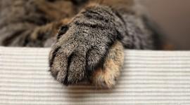 Cat's Foot Wallpaper Free