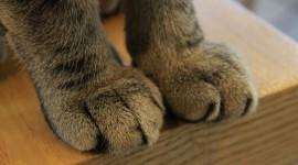 Cat's Foot Wallpaper Full HD