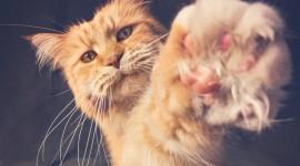 Cat's Foot Wallpaper Gallery