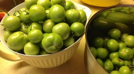 Green Tomatoes Wallpaper Background