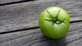 Green Tomatoes Wallpaper For PC