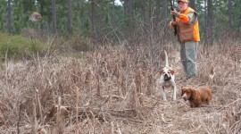 Hunting Dog Desktop Wallpaper HD