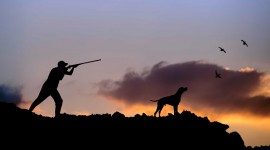 Hunting Dog High Quality Wallpaper