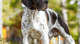 Hunting Dog Wallpaper For IPhone