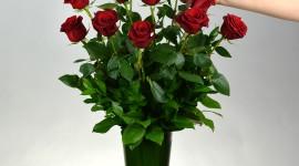 Long Roses Best Wallpaper