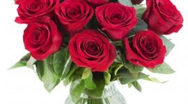 Long Roses High Quality Wallpaper