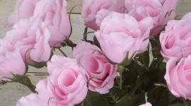 Long Roses Wallpaper