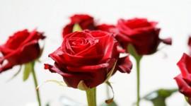 Long Roses Wallpaper For Desktop