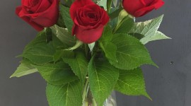 Long Roses Wallpaper For IPhone 6