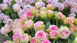 Long Roses Wallpaper For IPhone Download