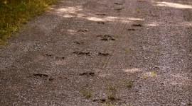 Moose Tracks Wallpaper 1080p