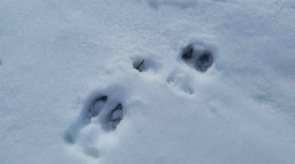 Moose Tracks Wallpaper Download Free