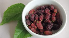 Mulberry Wallpaper Download