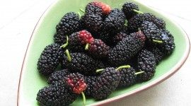 Mulberry Wallpaper Free