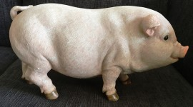 Pig Figurine Photo