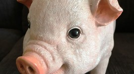 Pig Figurine Wallpaper For Mobile