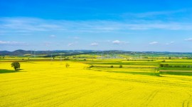 Rape Field Yellow Desktop Wallpaper