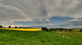 Rape Field Yellow Photo
