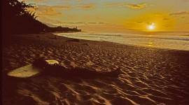 Surfer Sunset Image