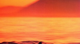 Surfer Sunset Wallpaper For IPhone