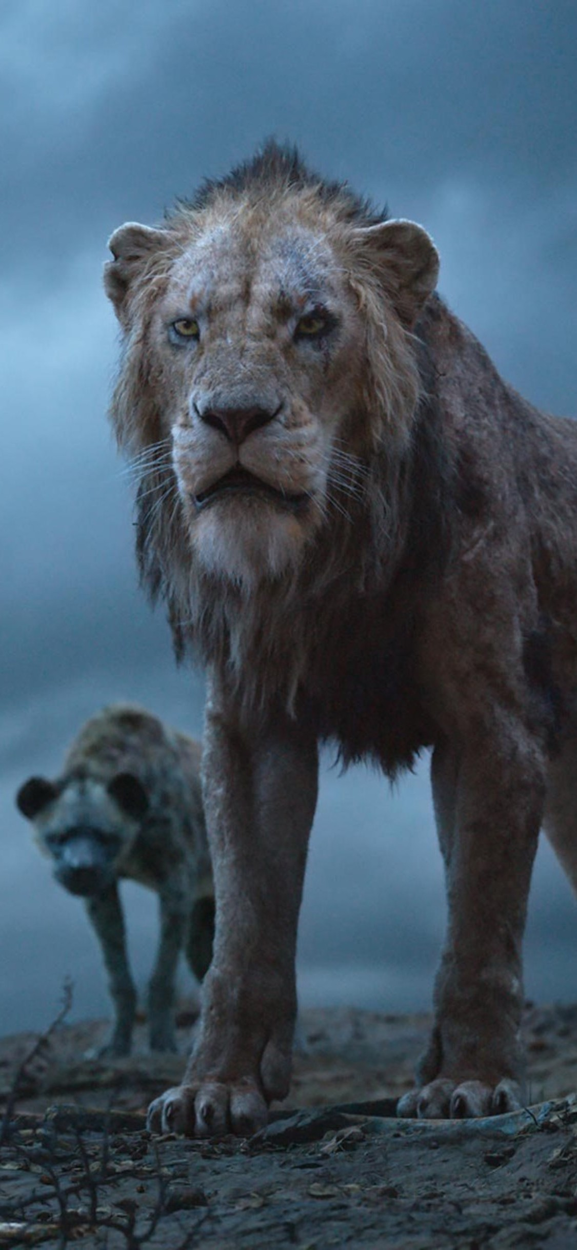 The Lion King 2019 Wallpapers High Quality Download Free