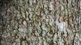 The Texture Of The Tree Image Download