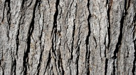 The Texture Of The Tree Photo#1