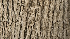The Texture Of The Tree Wallpaper For Android