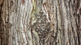 The Texture Of The Tree Wallpaper Free