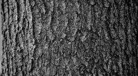 The Texture Of The Tree Wallpaper Full HD
